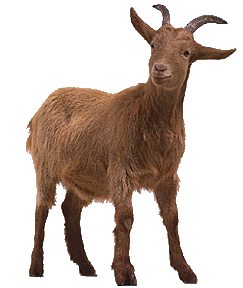 Free goat png images.