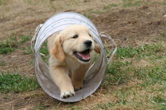 Cossyimages Puppy (31).jpg