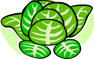 cabbage-297131__340.png
