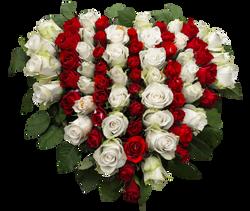 roses-1040758_Clip