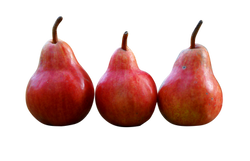 pears-1159014_Clip