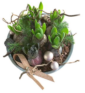 hyacinths-3035315_960_720.png