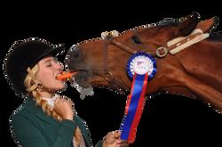 horse-934534_Clip