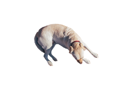 dog-933059_Clip
