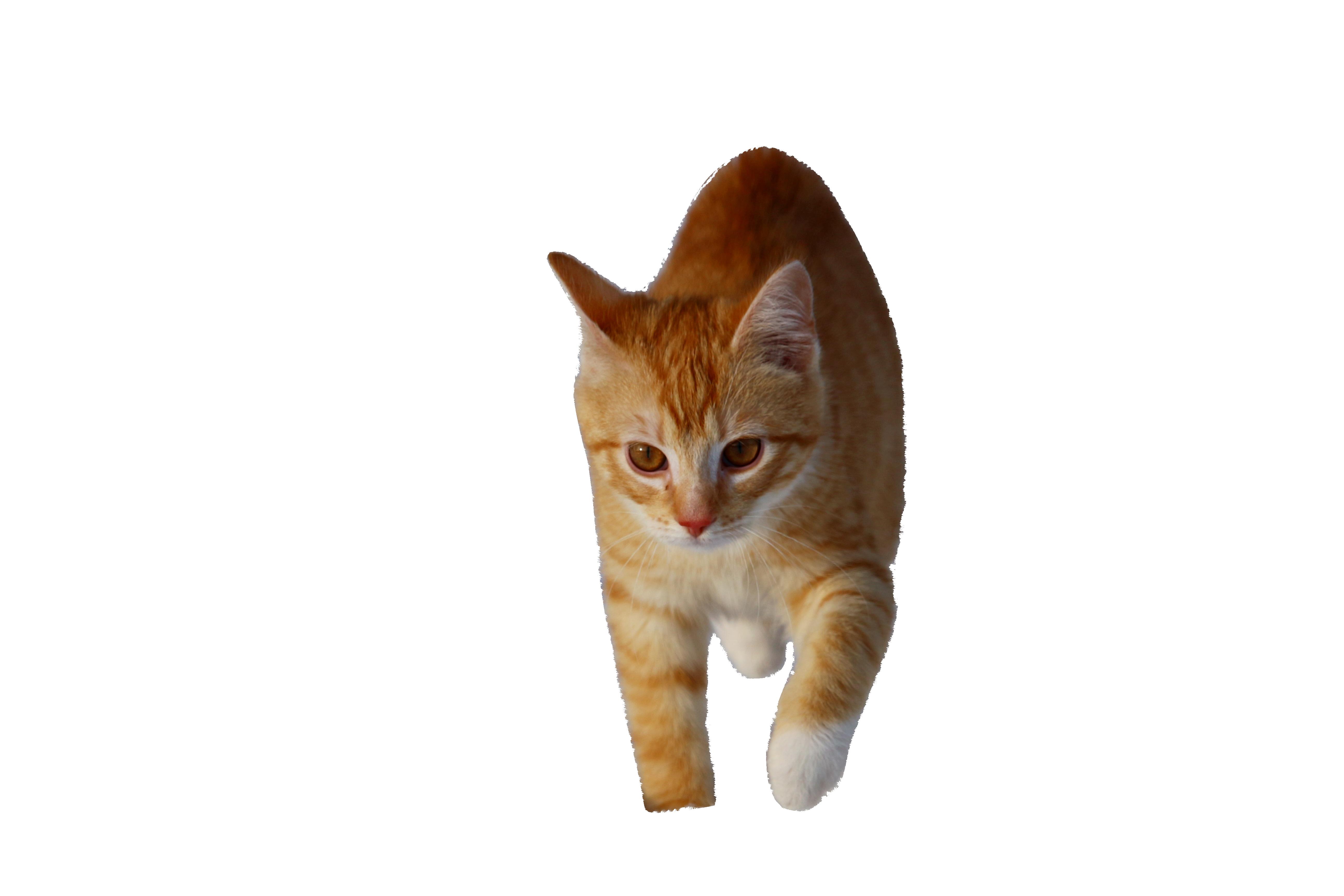 cat-1147266_Clip