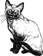 siamese-cat-48018__340.png