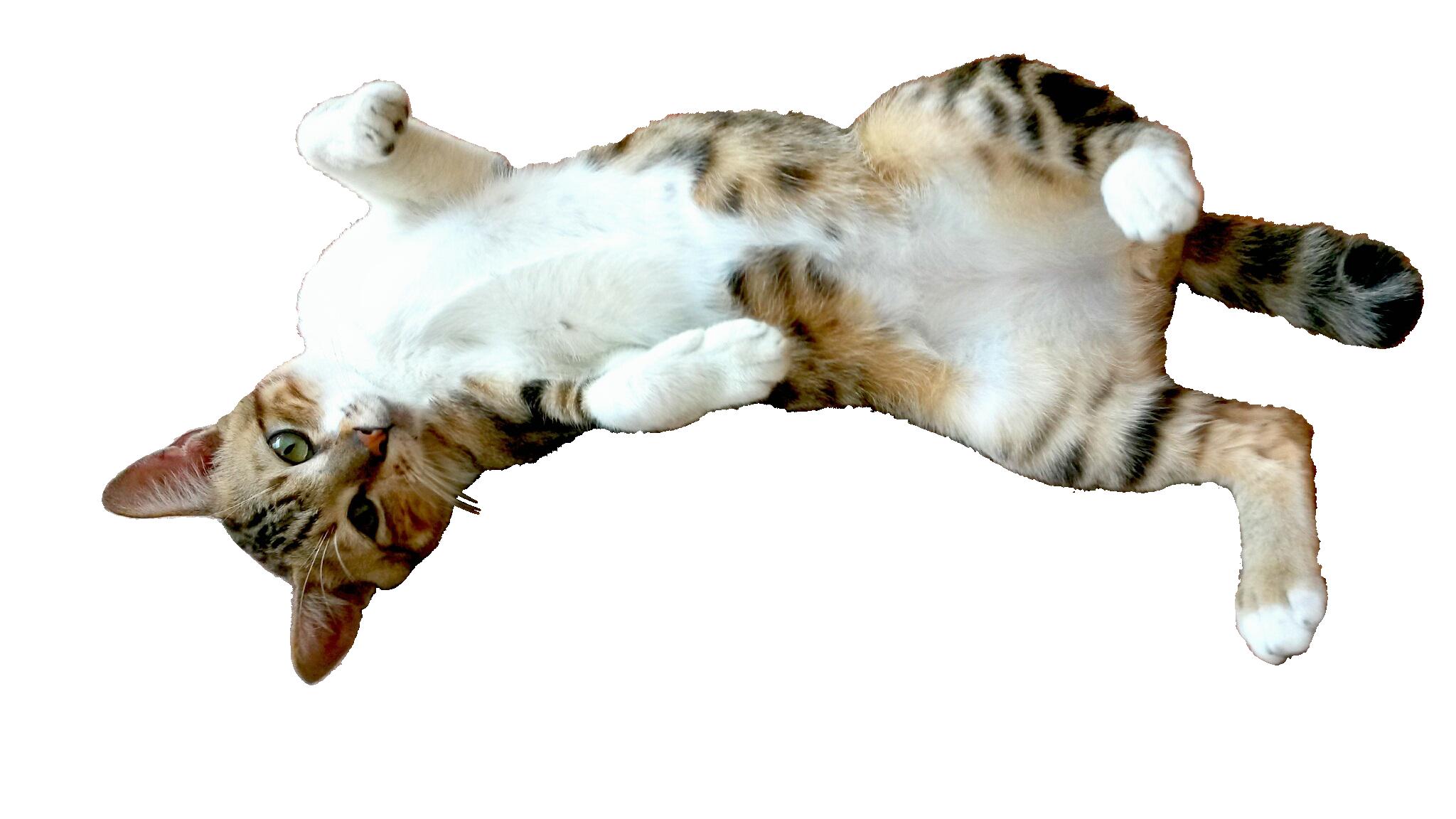 cat-443604_Clip