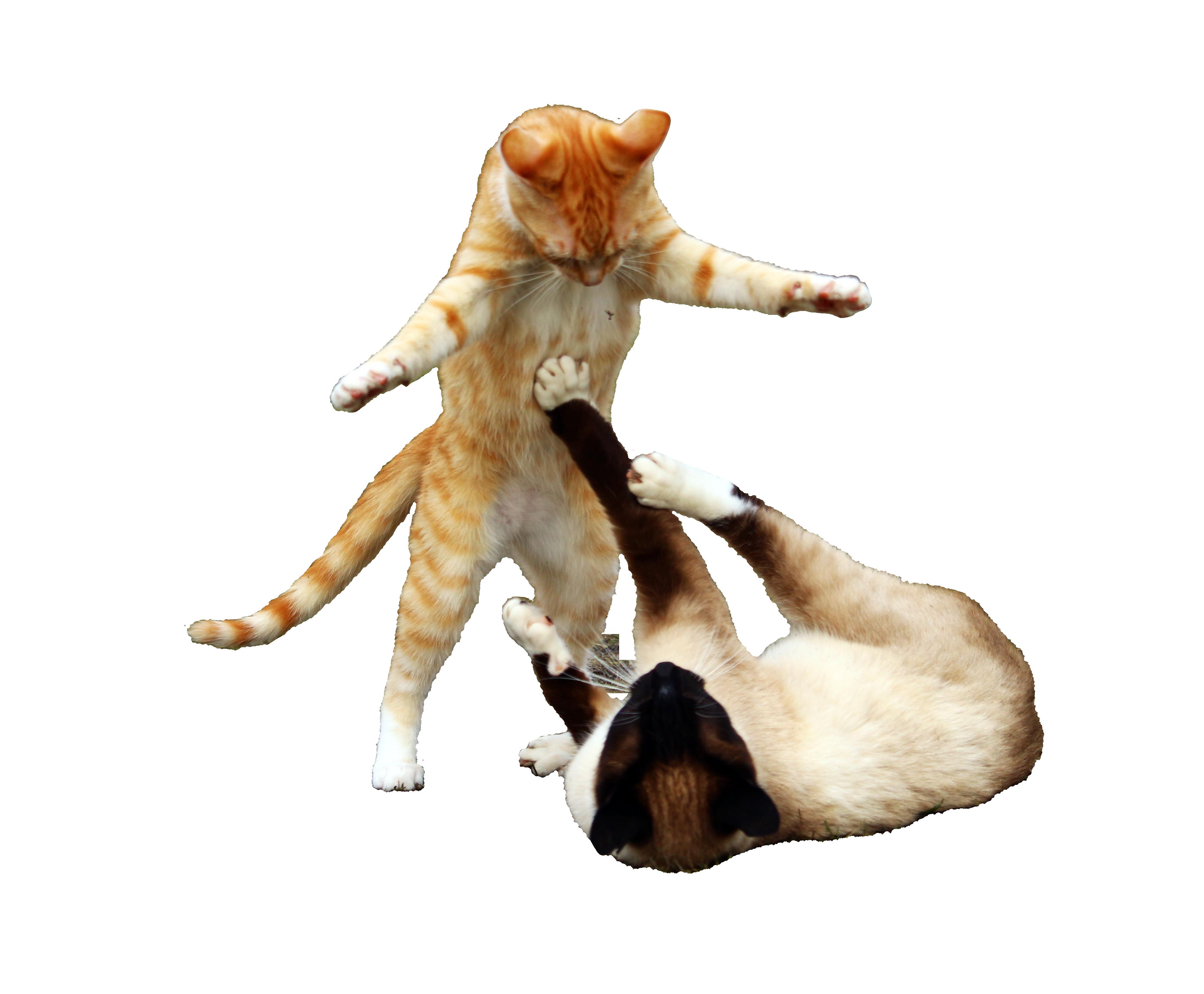 cat-1234950_Clip