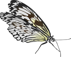 butterfly-33018__340.png