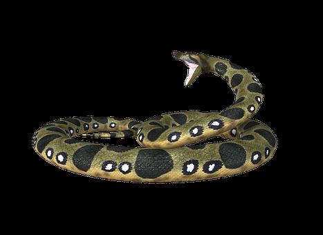 anaconda-2356239__340