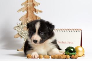 Cossyimages Puppy (26).jpg