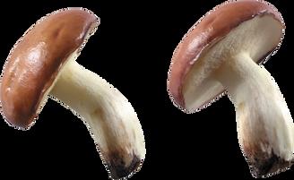 Mushroom, free PNGs