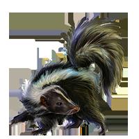 PNG images: Skunk