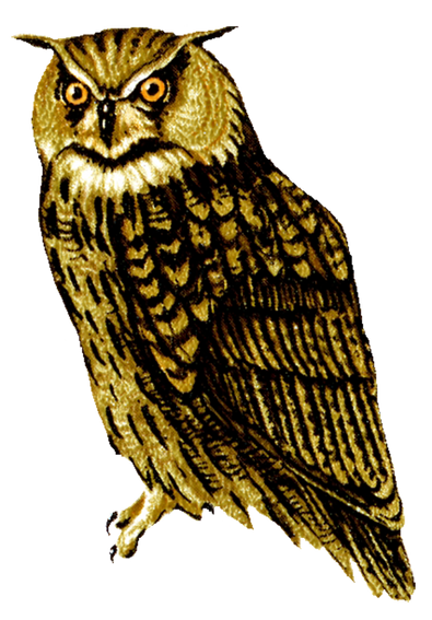 PNG images: Owl