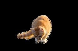 cat-1106932_Clip