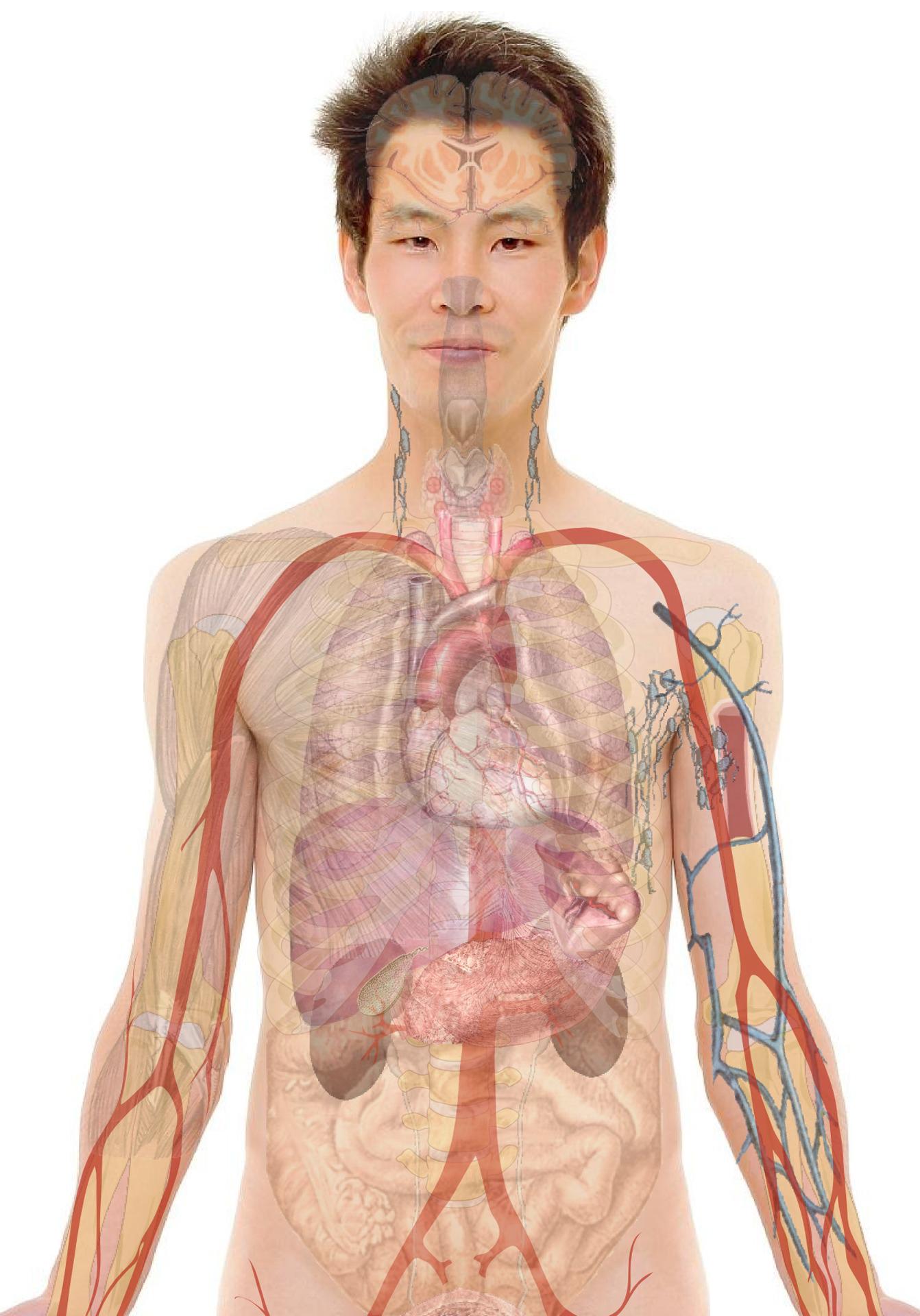 anatomy-254129_Clip