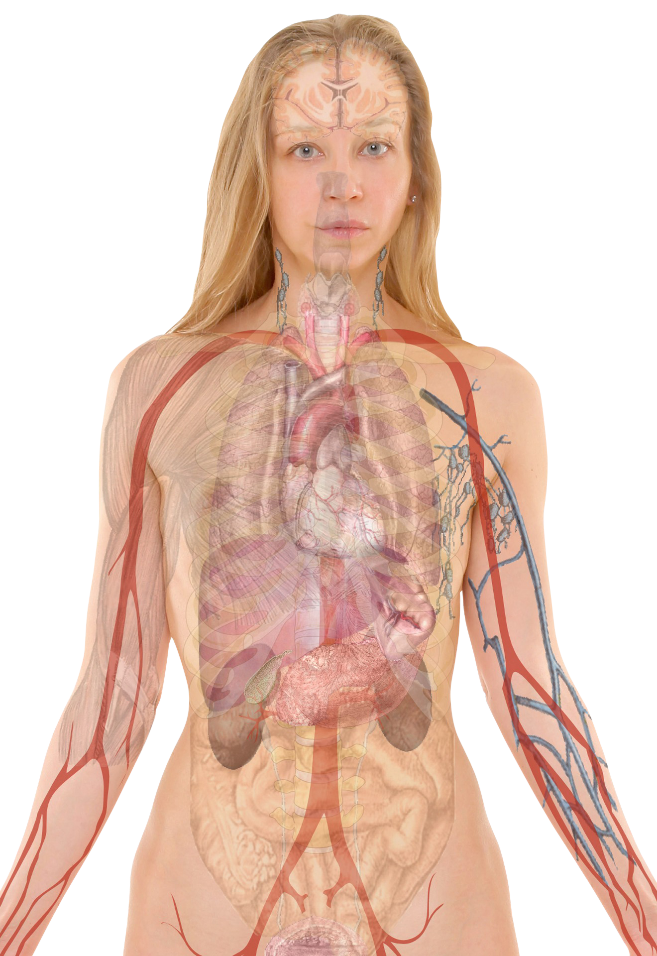 anatomy-254120_Clip