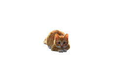 cat-1184743_Clip
