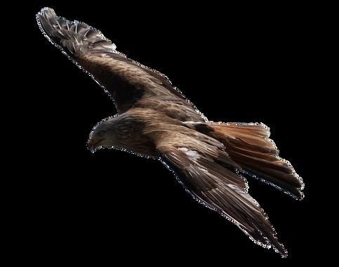 PNG images: flying, eagle, bird,