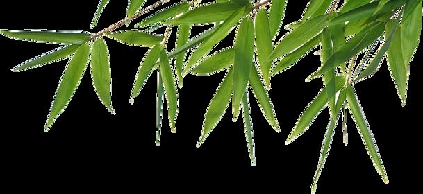 Bamboo (10).png