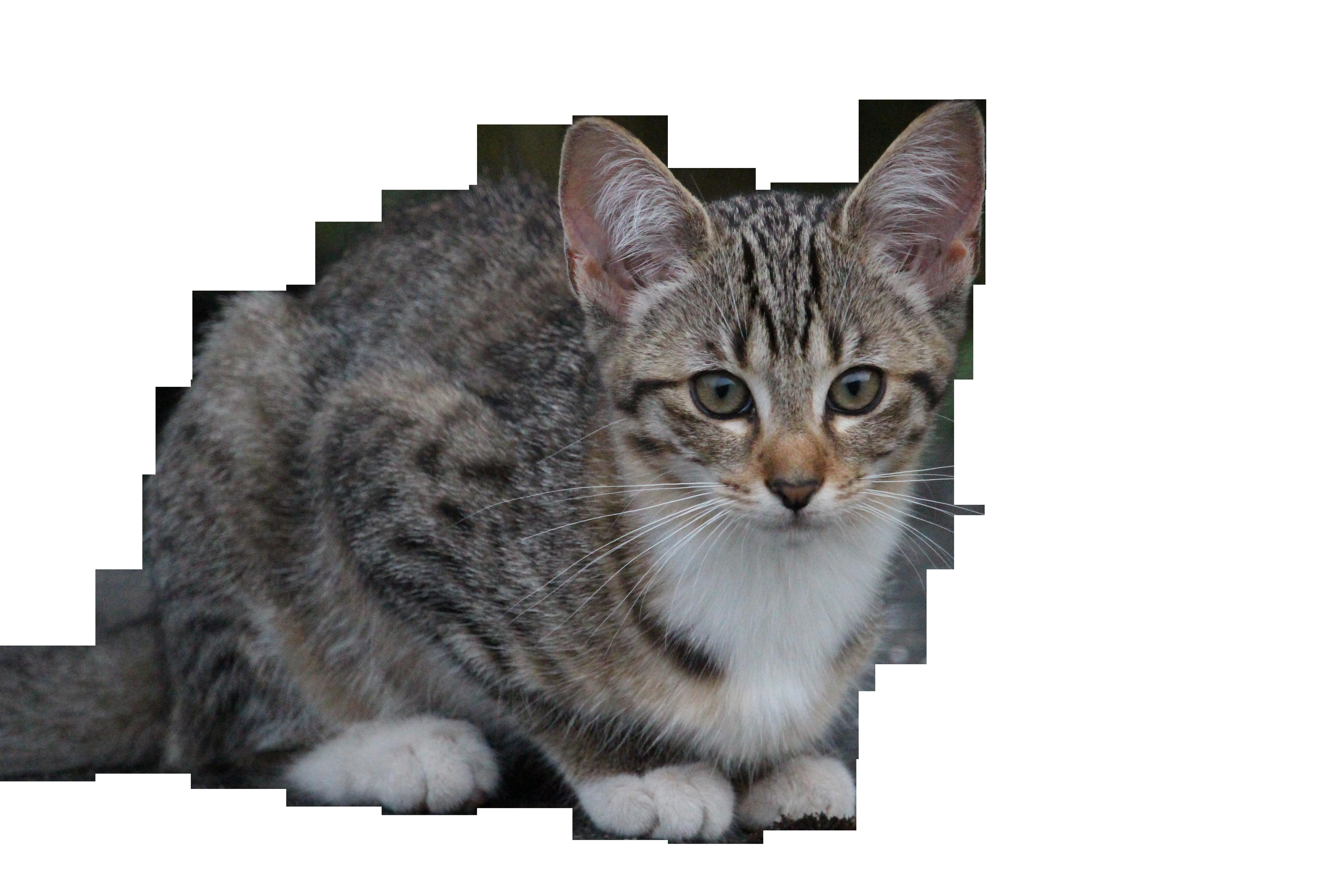 cat-896232_Clip
