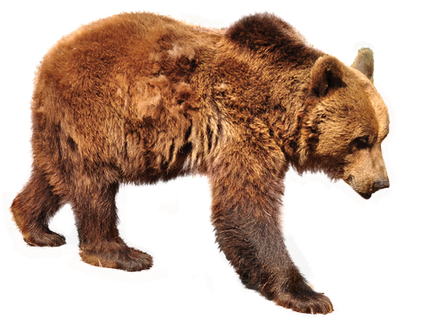 PNG images: bear