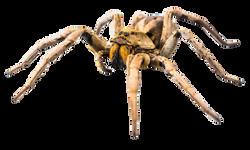 spider-348788_Clip
