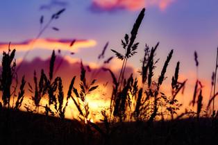 Cossyimages Sunset (58).jpg