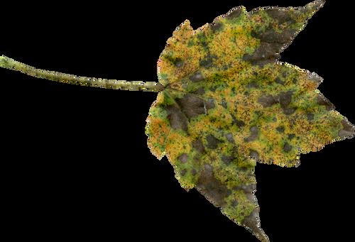 autumn-1690982_960_720.png