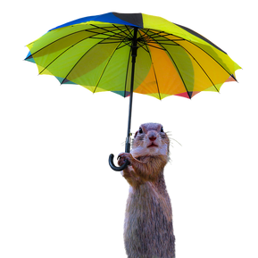 PNG images: squirrel, umbrella