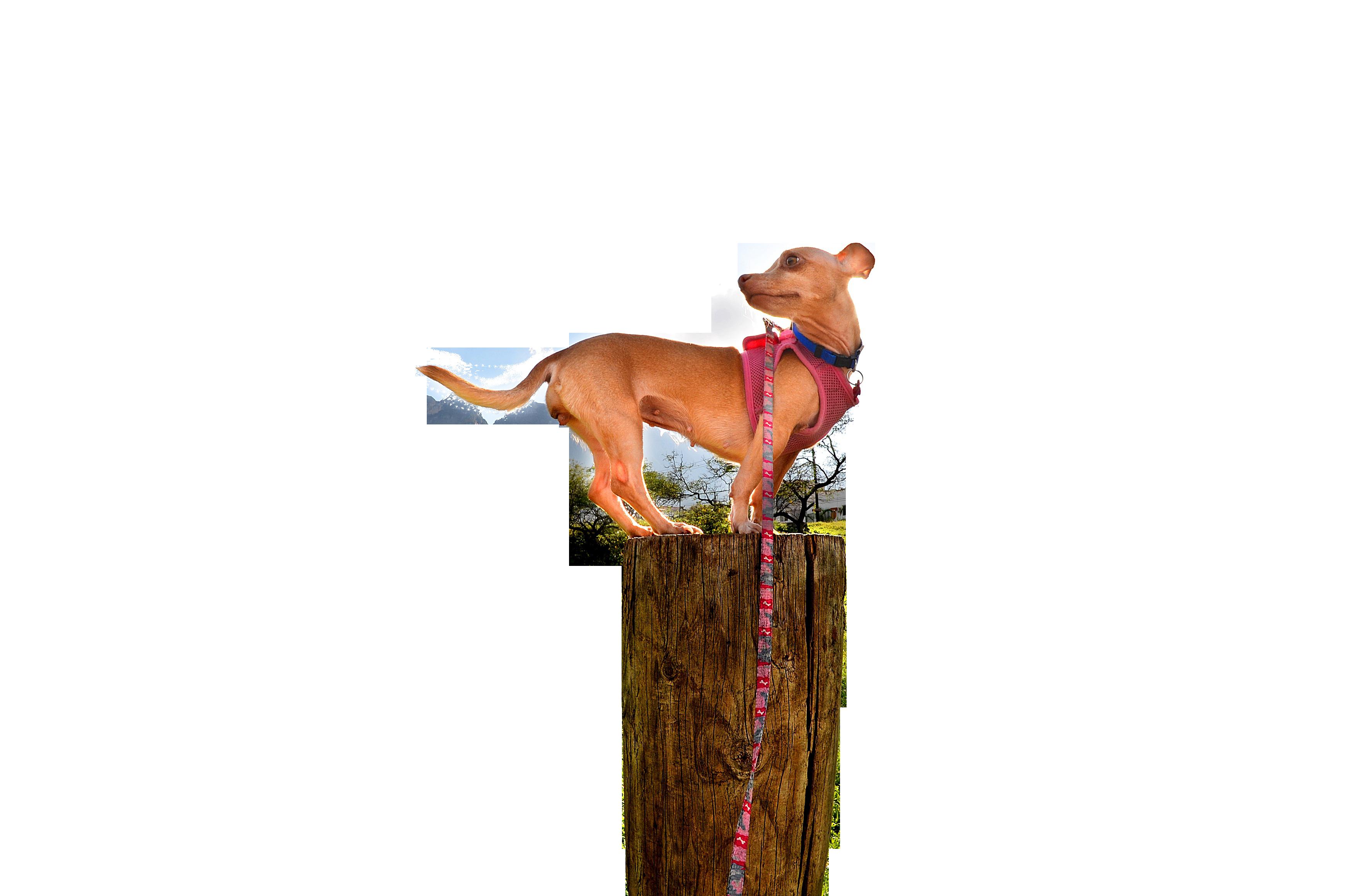 dog-778256_Clip