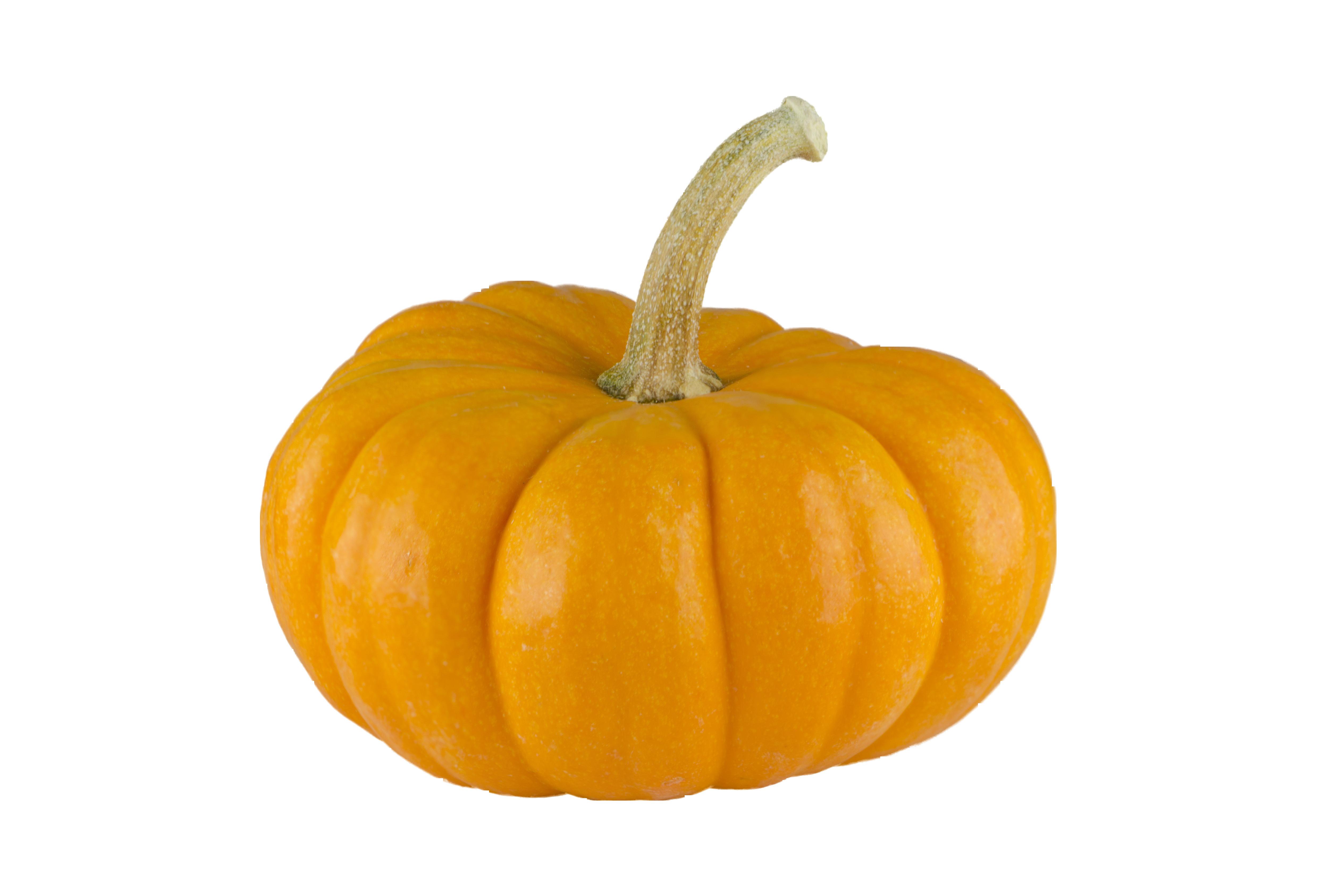 pumpkin-963043_Clip