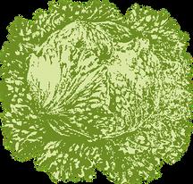 iceberg-lettuce-29882__340.png