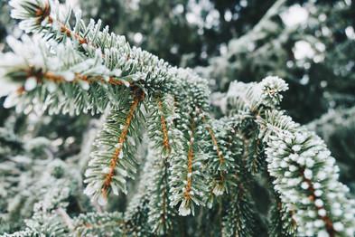 Cossyimages Winter (34).jpg