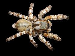 spider-538572_Clip