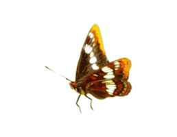 Butterfly01.png