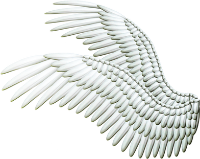Wing-png-03