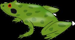 amphibian-160396__340