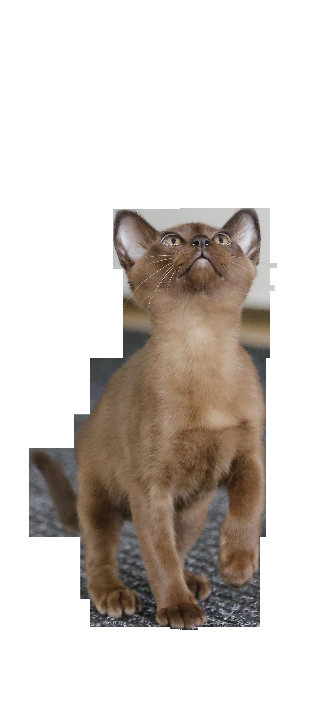 cat-787797_Clip