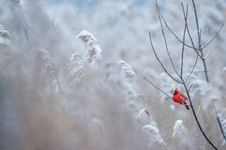 Cossyimages Winter (37).jpg