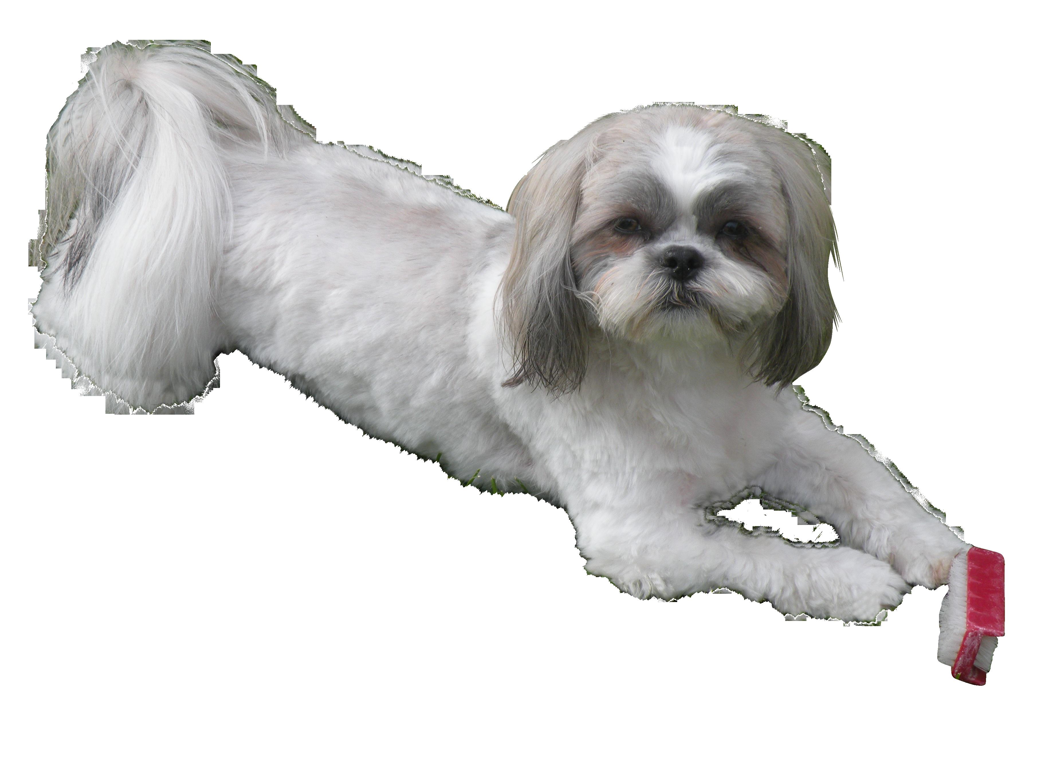 dog-860717_Clip