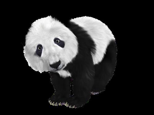 Panda transparent images