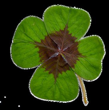four-leaf-clover-2980208_960_720.png