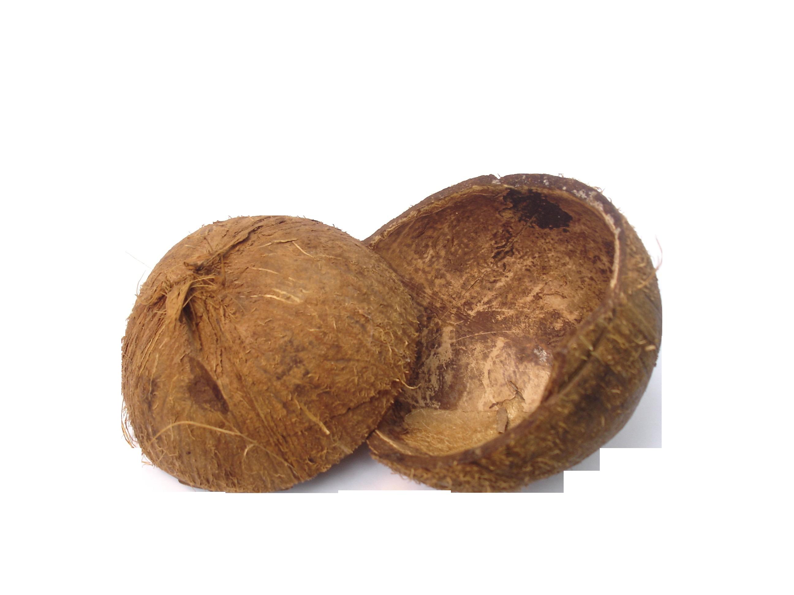 shell-341565_Clip