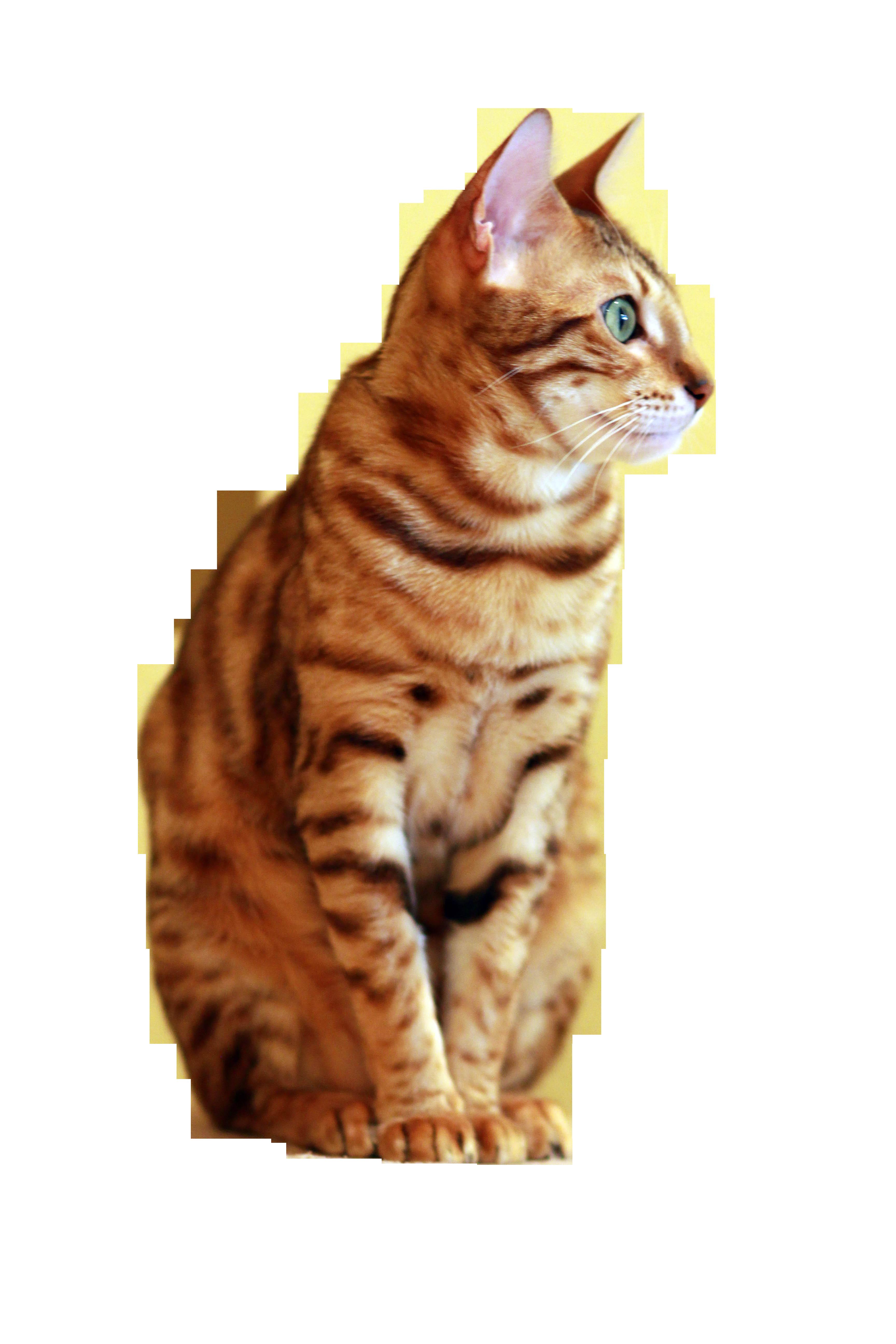 cat-877110_Clip