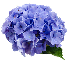 flower-2980200__340.png