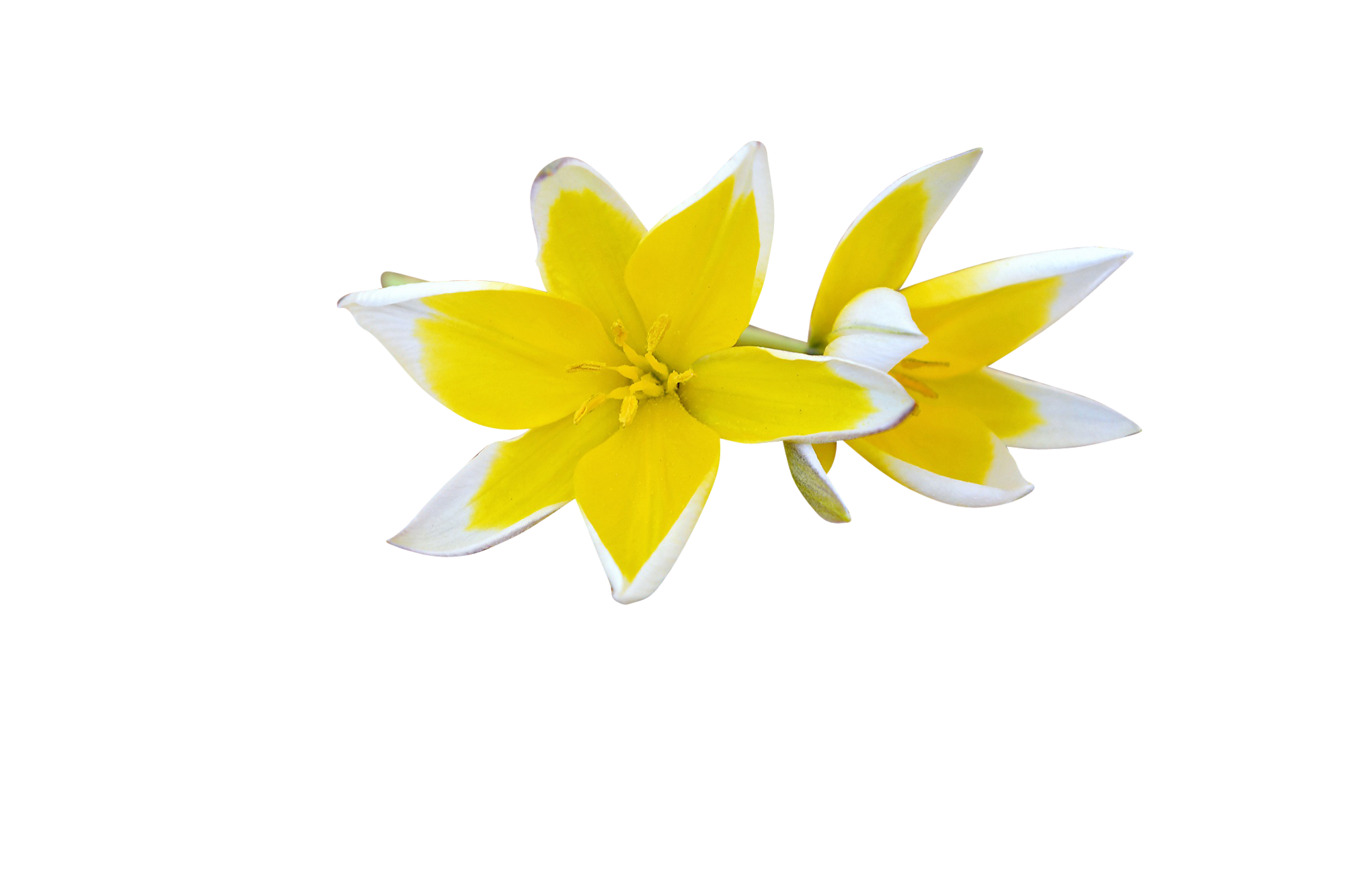 flowers-747206_Clip