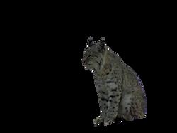 bobcat-1158000_Clip