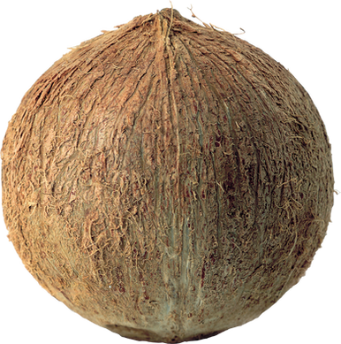 Coconut PNG