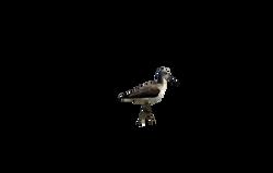 sanderling-1226832_Clip